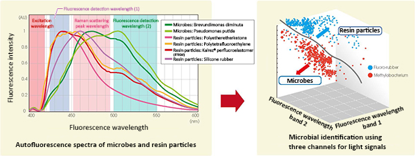Fig. 3. Difference between microbes and resin particles in fluorescence reaction (left).  Conceptual diagram of three-channel signal mapping for identifying microbes (right)