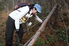 アズビル京都 樹木の調査の様子